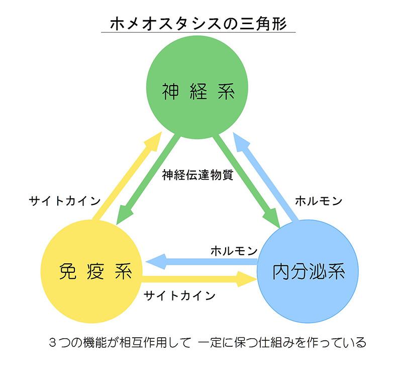 ホメオスタシスの三角形の図