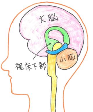 脳の視床下部