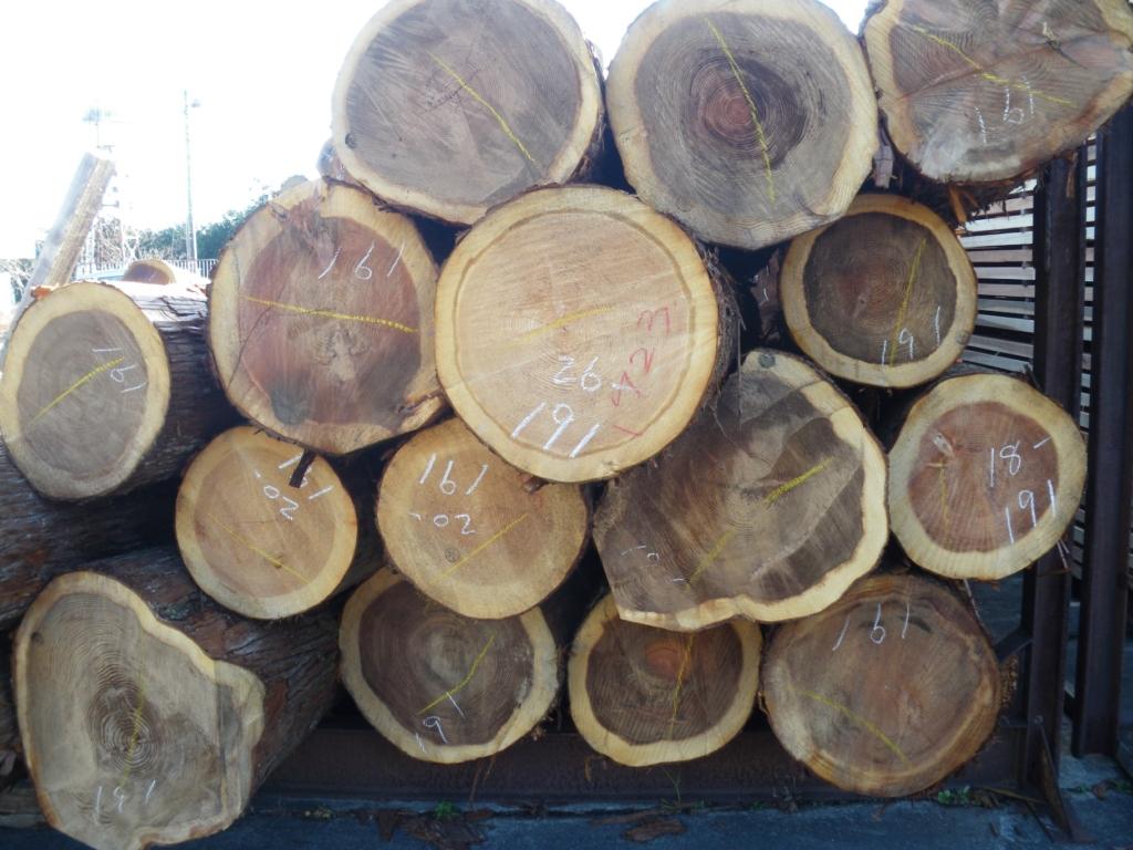 これは「百年杉」の丸太。やはり個体差をご理解いただけるでしょ。「尾鷲香杉」に「赤・黒込み」と「赤・黒別」の2カテゴリーがあるのはそういう事からです。