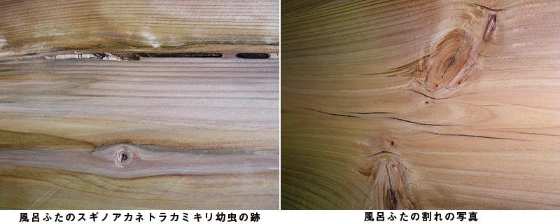 風呂ふたの割れの写真、風呂ふたのスギノアカネトラカミキリ幼虫の跡