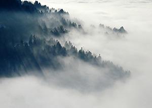 奇跡の森を有する日本