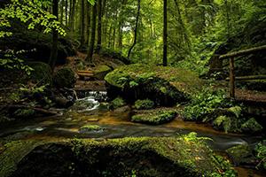 湿潤な日本の森