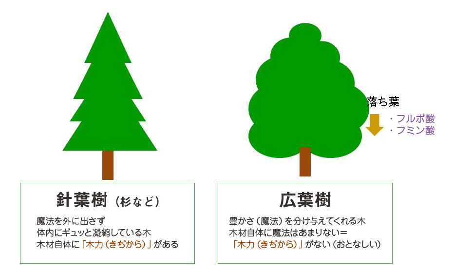 針葉樹(杉など):魔法を外に出さず体内にギュッと凝縮している木 木材自体に「木力(きぢから)」がある。広葉樹:豊かさ(魔法)を分け与えてくれる木、木材自体に魔法はあまりない=「木力(きぢから)」がない(おとなしい)