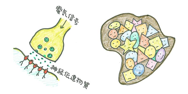数百億の神経細胞とシナプス