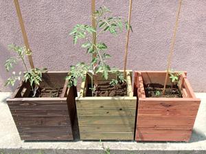 いっしょに考えるプランター自然農栽培セット