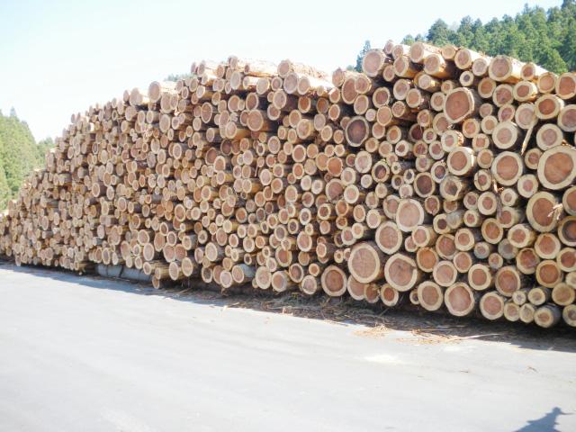 若年杉の丸太