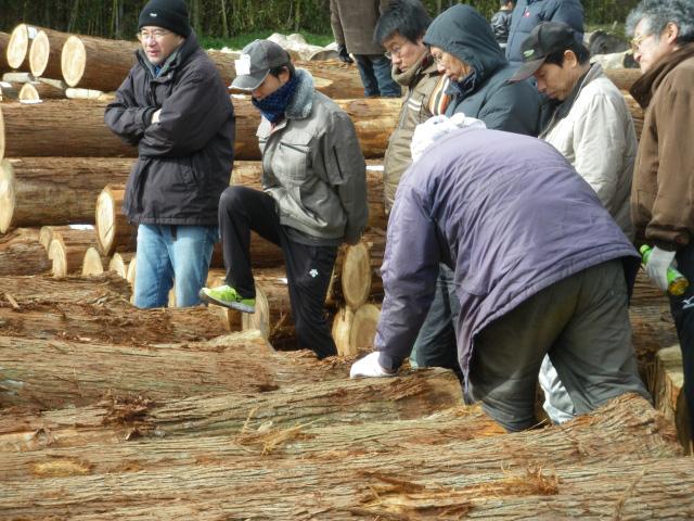 他産地の若年杉丸太群