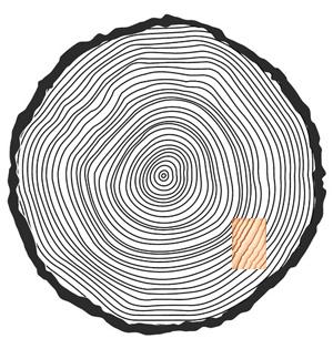 「こぐちパネル」の白太部の場所イメージ